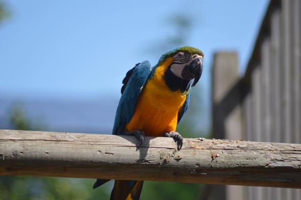 Macaw at Wingham Wildlife Park